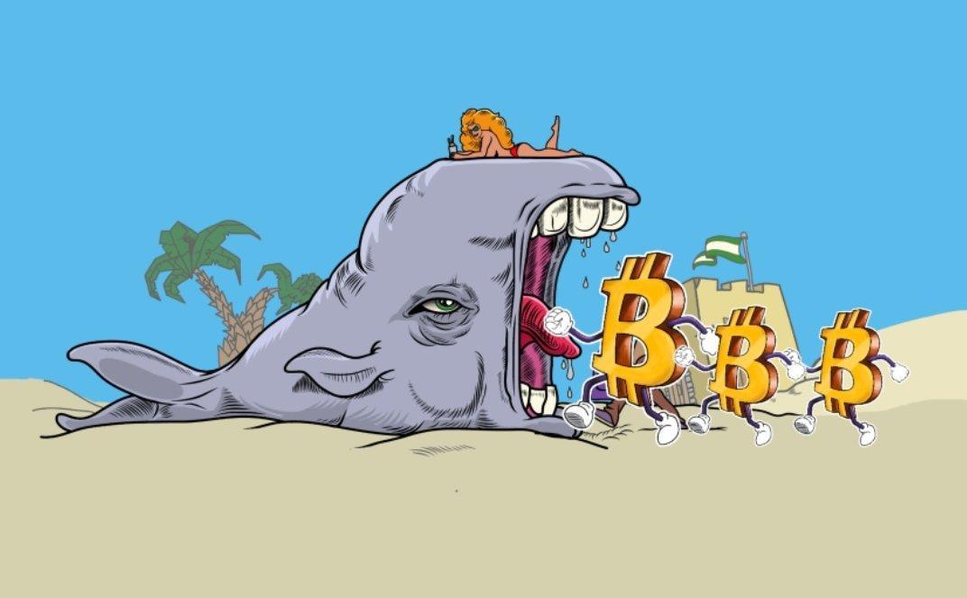 بيتكوين الحوت