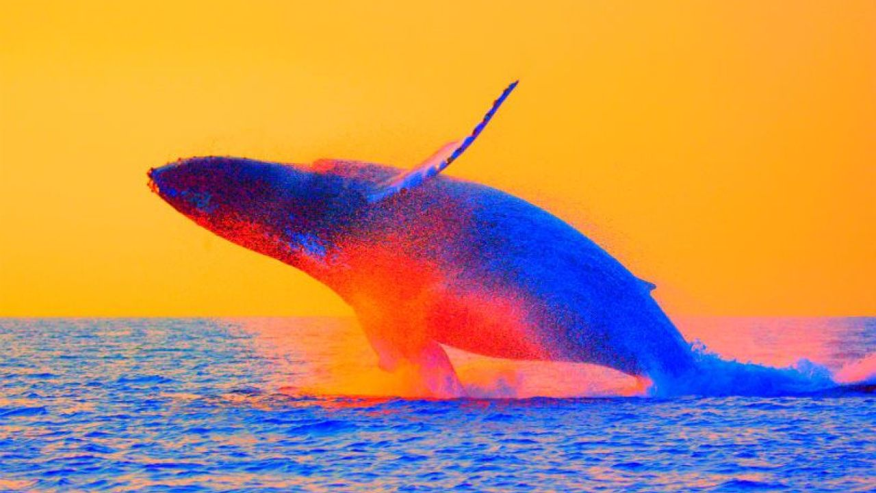 Cá voi Bitcoin nổi tiếng dự đoán giá BTC sẽ giảm mạnh trong đợt Halving