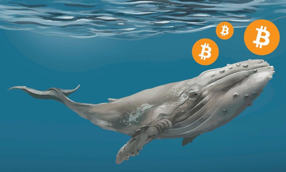 Cá voi Bitcoin di chuyển 2,2 tỷ USD BTC