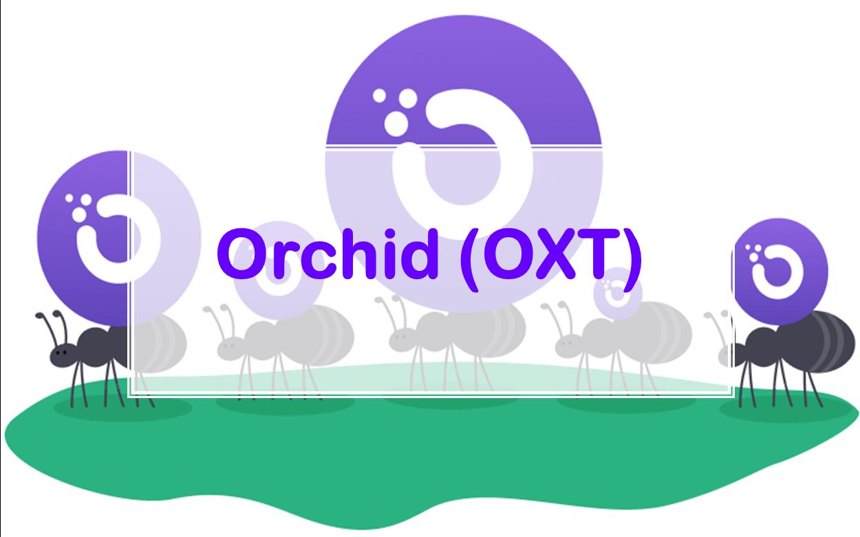Что такое орхидея окст