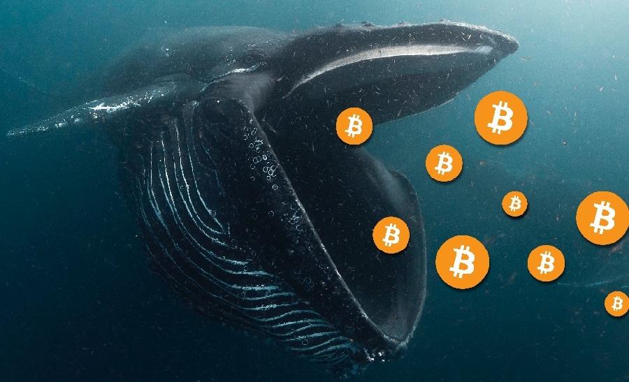 Mbio ya kununua Bitcoin ya 'watu wakubwa'