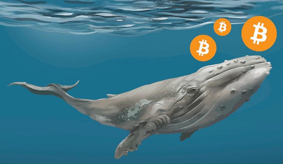 Velryba právě zlikvidovala téměř 100 milionů USD BTC?