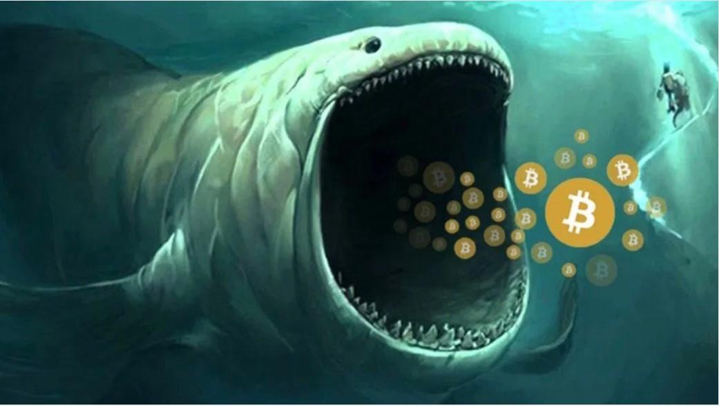 PayPal và Square đang mua tất cả Bitcoin mới được khai thác