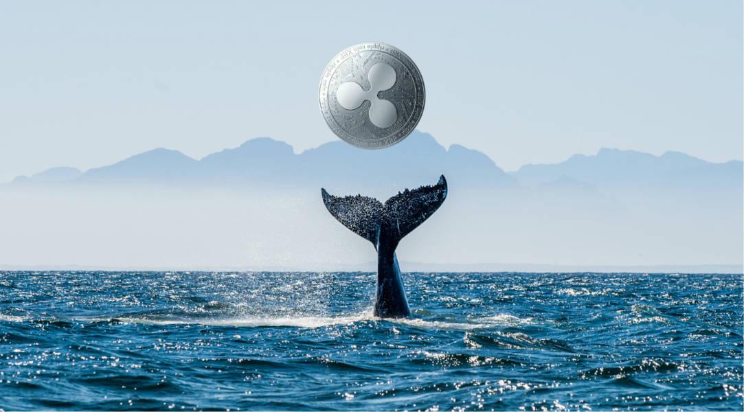 Hơn 500 triệu XRP được các cá voi đột ngột di chuyển