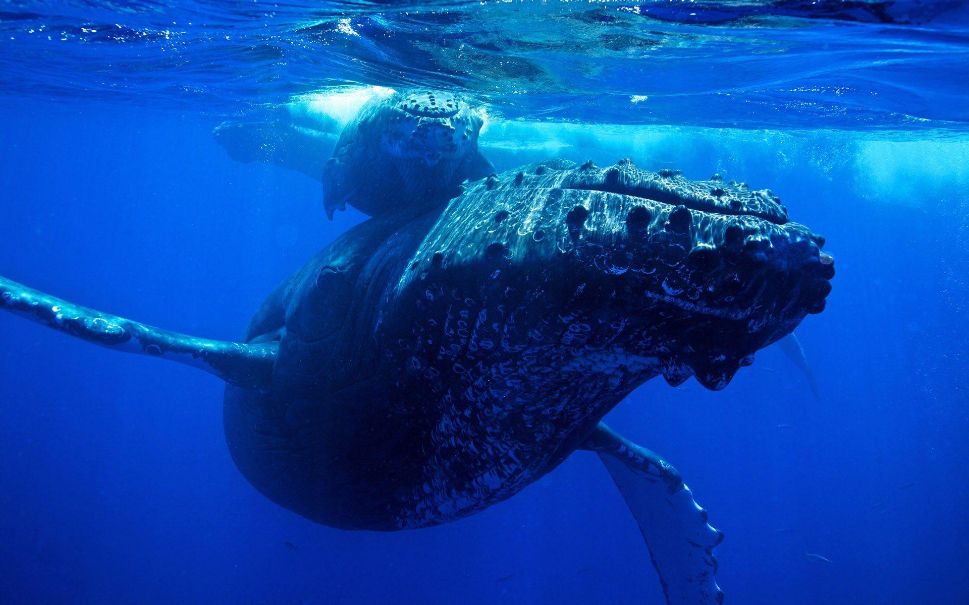 Velryby nadále nakupují bitcoiny, přestože trh pravděpodobně zaznamená silnou korekci