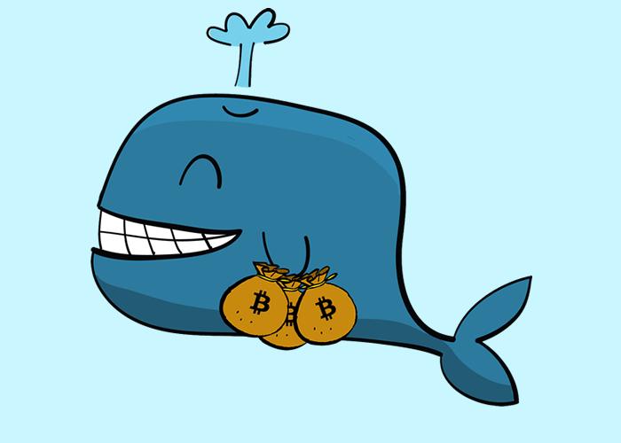Obě velryby převedly stovky milionů dolarů v bitcoinech do Coinbase