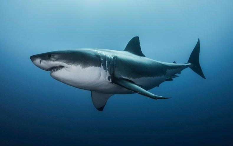 Một cá mập tiết lộ chi tiết toàn bộ số tiền điện tử đang hold