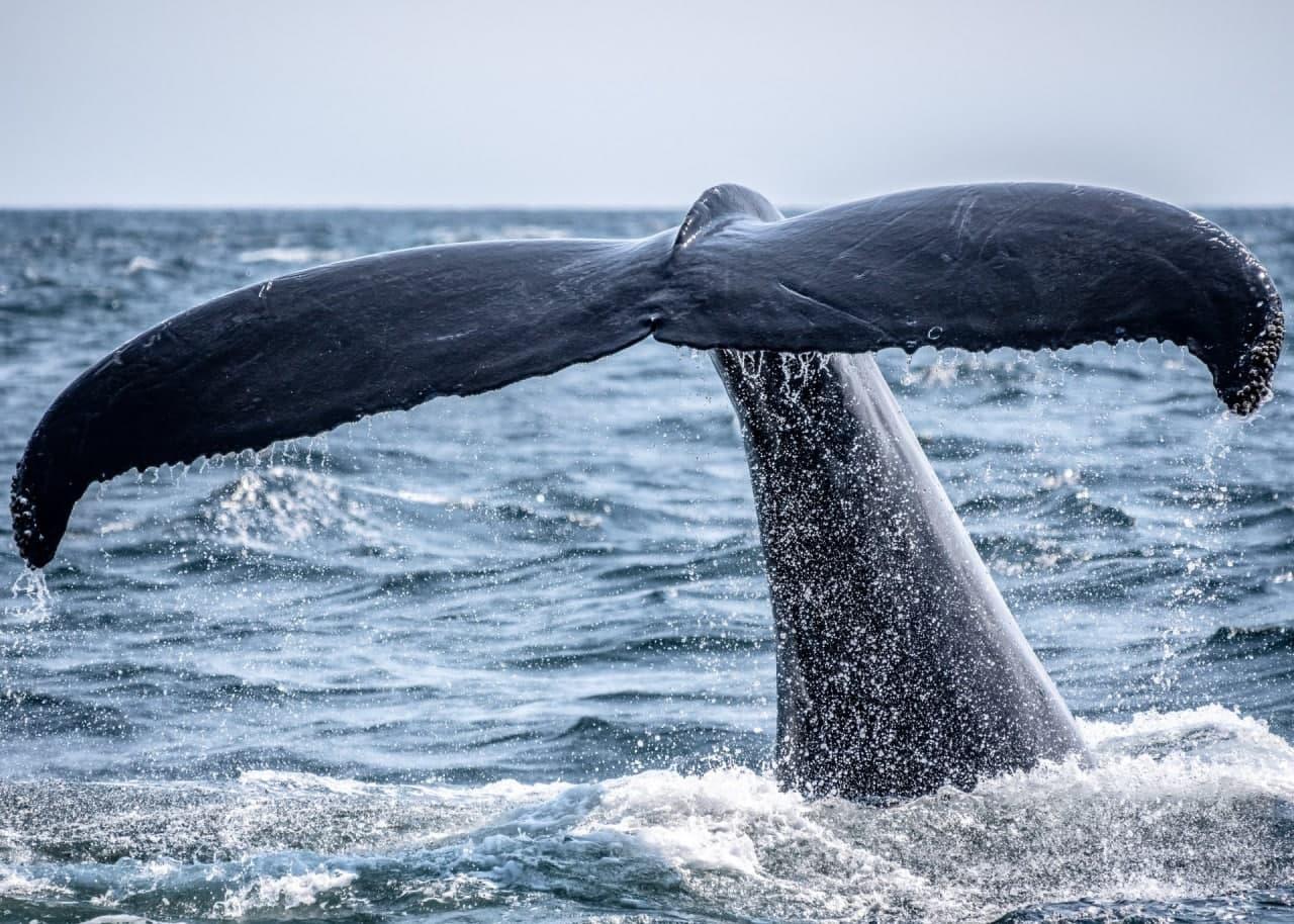 Cá voi Bitcoin tiếp tục tích lũy mặc dù giá BTC đang giữ trên 50.000 USD