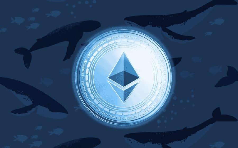 Top 10 địa chỉ cá voi Ethereum tích lũy thêm 1 triệu ETH chỉ trong một ngày