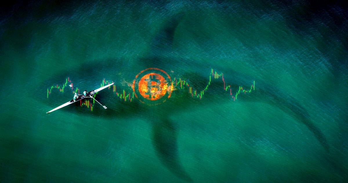 鲸鱼将BTC送往交易所引发人们对另一轮牛市的担忧