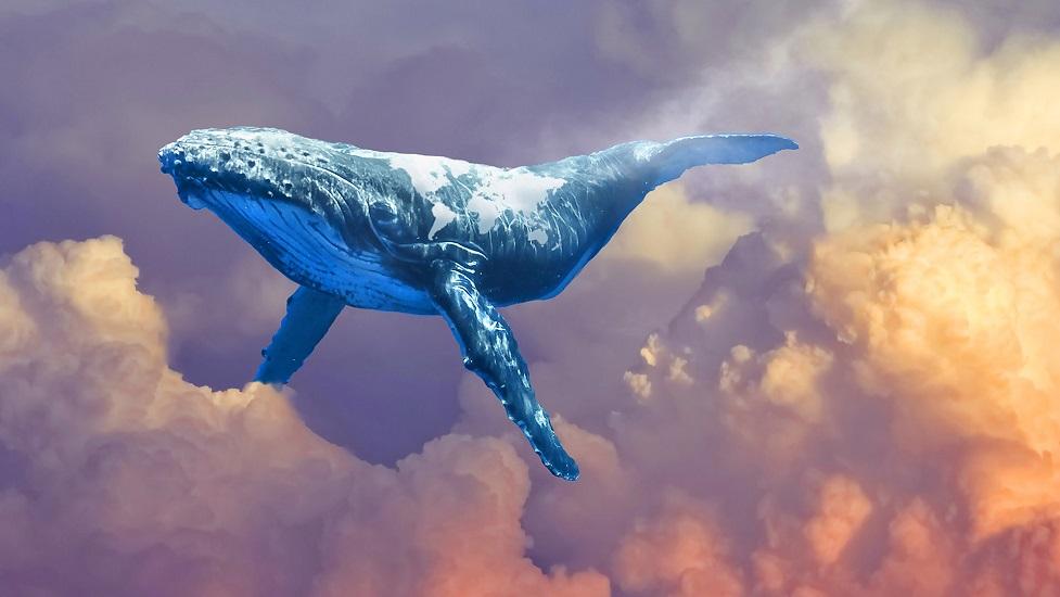 Các cá voi mất bao nhiêu tiền trong đợt điều chinh lần này?