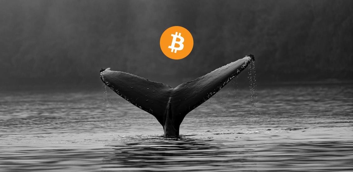 Cá voi tích lũy hơn 2 tỷ USD Bitcoin trong một tuần